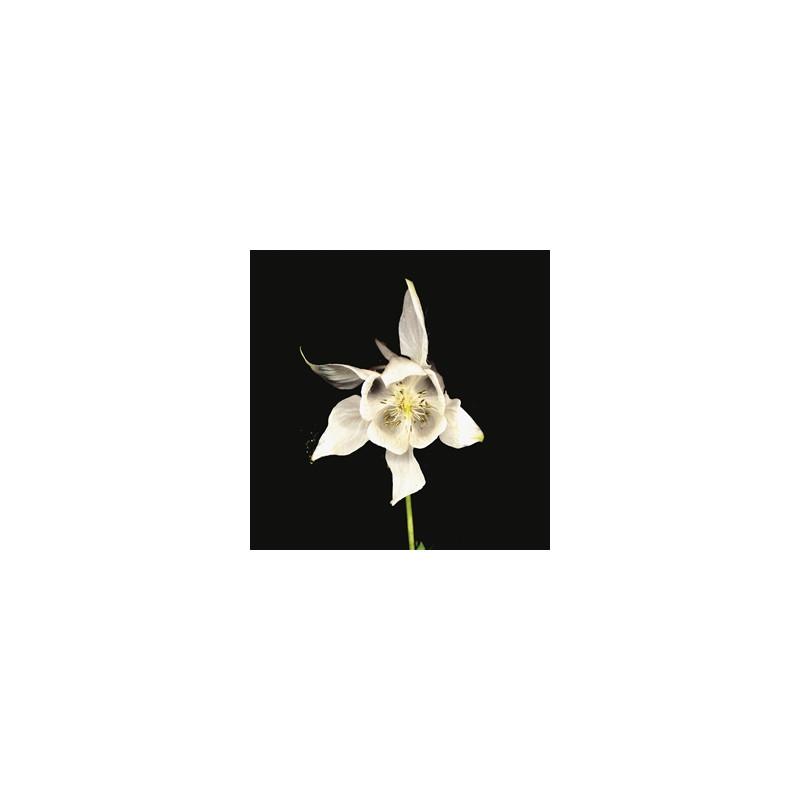 White, Tony Joe - Smoke From The Chimney Lp