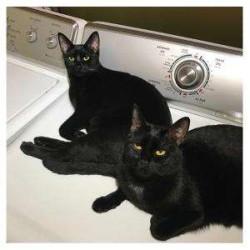 "Domenico Torti - Radar (feat. Afrika Bambaataa) (orange Fluo Vinyl) 12"""